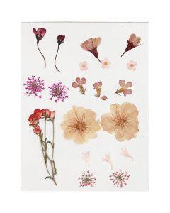 Pressed flowers, light rose, 1 pack