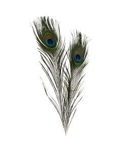 Peacock feathers, L: 25-30 cm, 10 pc/ 1 pack