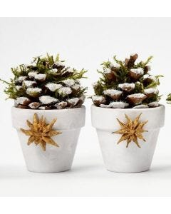 Flowerpots with Pinecones