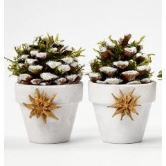 Flowerpots with Pinecones