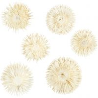 Dried flower heads, D: 3-5 cm, 6 pc/ 1 pack
