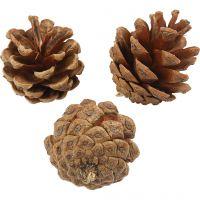 Pine Cones, D: 40 mm, 500 g/ 1 pack