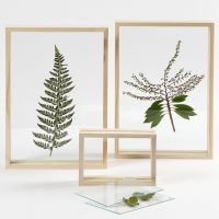 A dried Leaf in a double-sided Frame